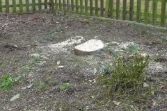 Baumstupffräse 1
